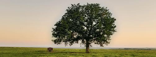 Kraftort Baum