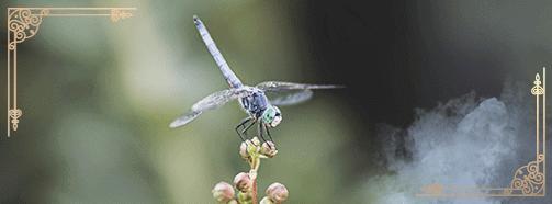 Krafttier Libelle
