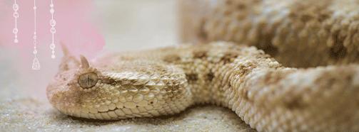 Krafttier Schlange