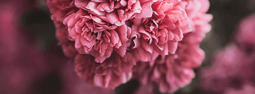 Traumdeutung Blumen