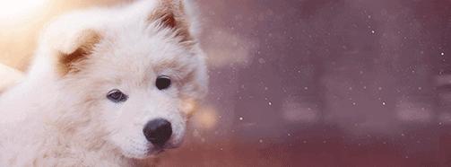 Bedeutung vom Traumsymbol Hund